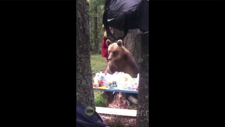 На завтрак к туристам зашел вежливый медведь