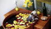 Салоны красоты для животных набирают популярность в Молдове
