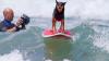 В Калифорнии прошли состязания по сёрфингу среди собак