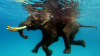 Видео: В американском зоопарке слон поплескался в воде с гусем