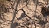 В молдавском селе сохранили традицию проводить в засуху калоян