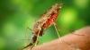 Какие натуральные запахи отпугивают комаров