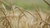 Урожай зерновых в нынешнем году богаче, чем в прошлом