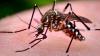 В Германии женщине ампутировали обе ноги и руку из-за укуса комара