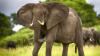 Cоздан переводчик человеческой речи на слоновий язык