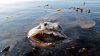 В Австралии 16-летнего подростка покусали неизвестные водные хищники
