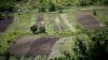 Урожай сахарной свеклы в этом году составит до 30 тонн с гектара