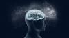 Названы главные отличия женского мозга от мужского