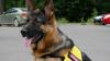 В Манчестере подозреваемый при задержании искусал полицейскую собаку: видео