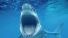 У берегов Пхукета акула напала на японского туриста