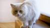 Многие владельцы собак и кошек регулярно возят питомцев в зоосалоны