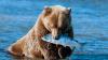 Охоту ленивого медведя сняли на видео