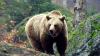 68-летний японец отразил нападение медведя приемами каратэ