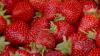 В Финляндии бесследно растворились около сорока украинских сборщиков ягод