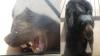 Зашедшего в дом медведя выгнали ударом по носу