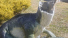 Неизвестные отпилили головы моделям динозавров в австралийском музее