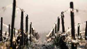 Россиян предупредили о заморозках до –2 градусов