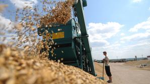 Мировые показатели урожайности пшеницы в этом году на 2% ниже, чем в прошлом