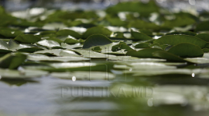 23 августа в республике сохранится пасмурная погода, местами возможны кратковременные дожди