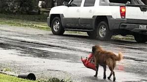 """В Техасе пес стал местным героем, основательно """"подготовившись"""" к урагану"""