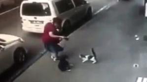 В Турции агрессивная кошка чуть не загрызла собаку и сбила с ног её хозяйку