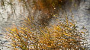 Синоптиики вводят жёлтый код метеоопасности в связи с дождями и усилением ветра