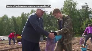 Лукашенко с сыном собрали урожай картошки: видео