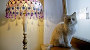 Одна из нижегородских строительных компаний открыла вакансию для кота