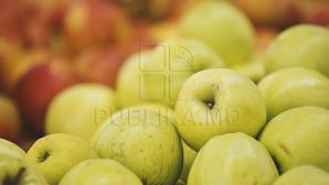 Этой зимой Евросоюзу грозит дефицит яблок из-за низкого урожая