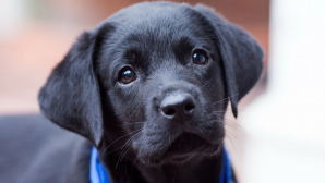 В Японии полицейская собака получила орден за помощь в поимке якудза
