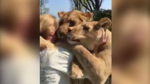 Львы бросились обнимать первую хозяйку, которую не видели семь лет: видео