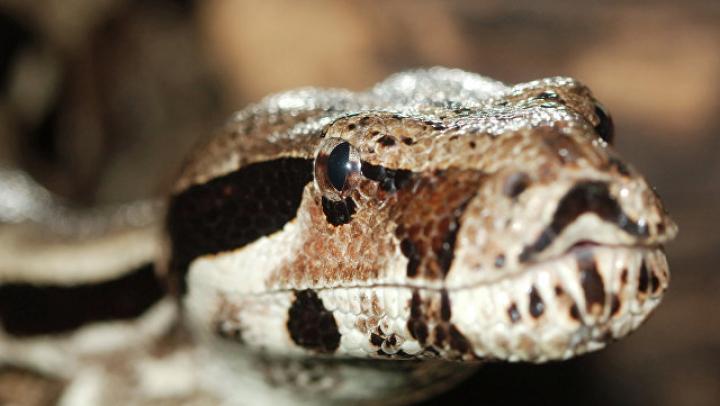 Австралийские журналисты вешалкой поймали змею, заползшую в редакцию