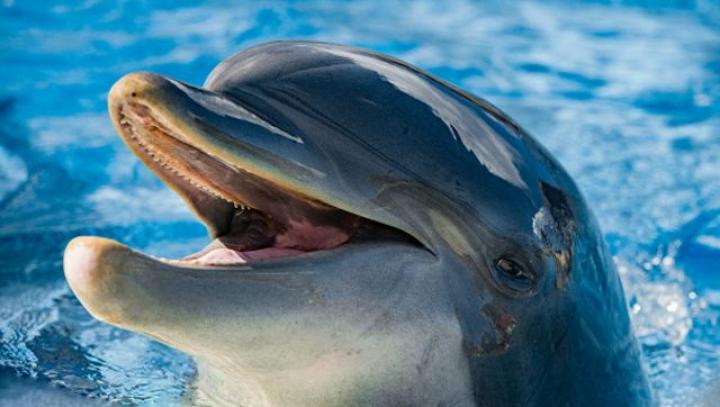 Туристы в Испании за 15 минут замучили дельфина до смерти ради селфи