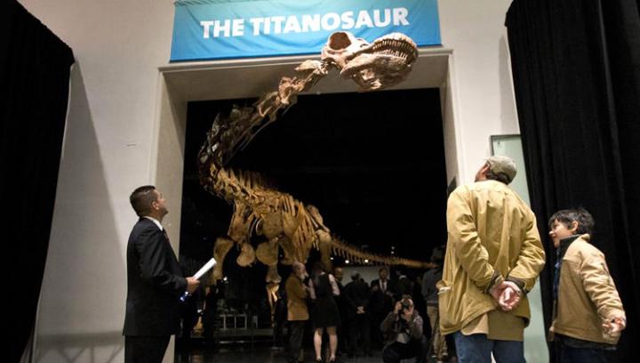 Опубликовано научное описание самого крупного сухопутного существа в истории