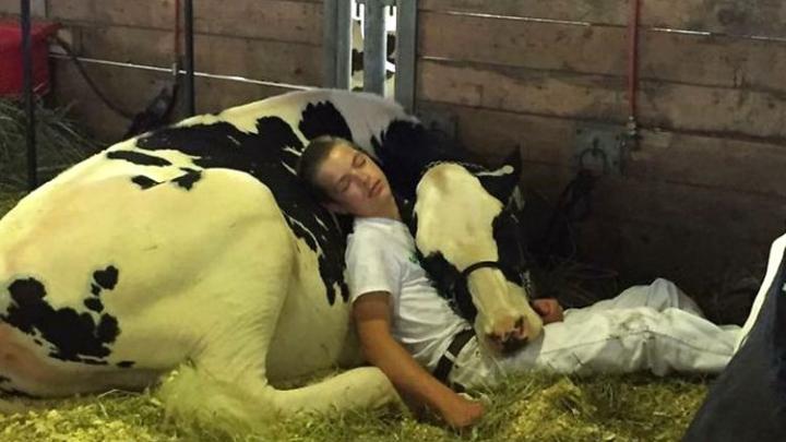 Уснувшие в обнимку мальчик и корова покорили интернет
