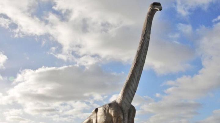 В Аргентине обнаружили останки самого большого динозавра