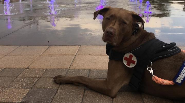 Девушка обучила собаку оказывать первую помощь при приступе эпилепсии