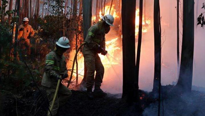 Итальянский пожарный признался, что разжигал огонь в лесах ради адреналина