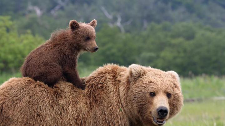 Житель Свердловской области вышел победителем из схватки с медведем