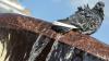 Аргентинская полиция ликвидировала голубя-наркокурьера