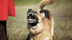 Дикие собаки растерзали туристку в Греции