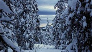 Погибшего туриста на перевал Дятлова привели загадочные обстоятельства