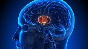 """Ученые вернули сознание пациенту с """"мертвым"""" мозгом"""