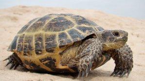 Гигантскую 700-килограммовую черепаху обнаружили на пляже Испании: фото