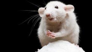 Ученые: Голодание провоцирует рост волос