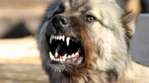 Бездомная собака покусала девятилетнего мальчика из Комратского района