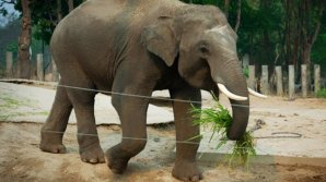 """Ученые: Браконьеры заставили слонов стать """"совами"""""""