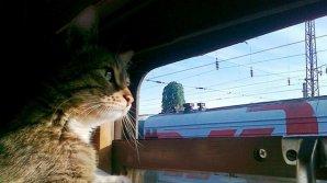 В Японии появился первый в мире кошачий поезд