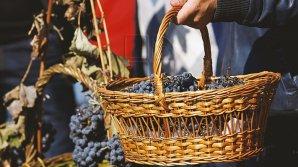 В Национальном дне вина примет участие рекордное число виноделов