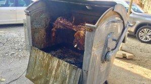 Необычный способ приготовления мяса в мусорном контейнере придумали в Румынии